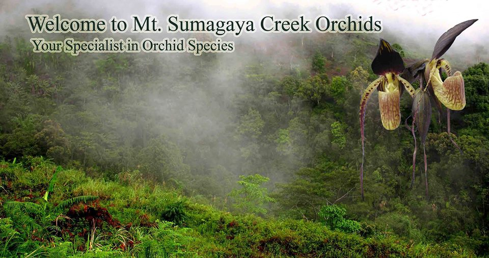 mt-sumagaya-creek-orchids-1